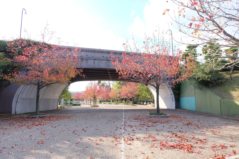 相撲場で有名な堺市の公園!大浜公園の遊具やひろば | イエモア