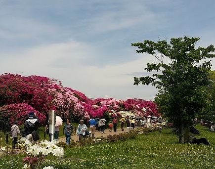 浅香山公園の画像です
