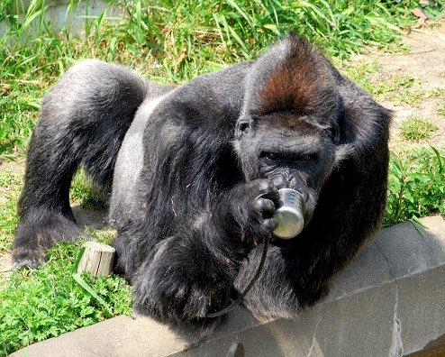 福岡市動植物園の画像です