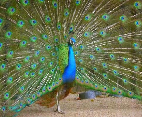 久留米市鳥類センターの画像です