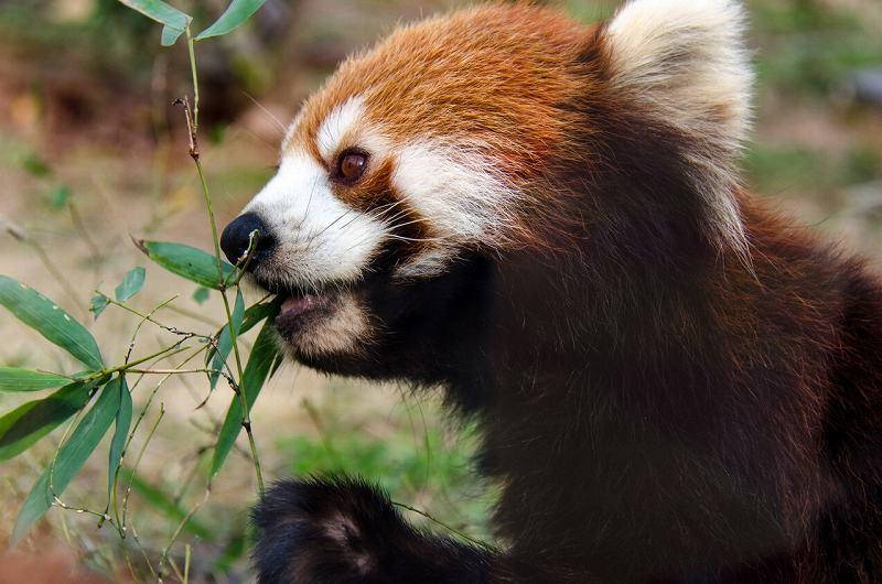 京都市動物園(京都)の画像です。