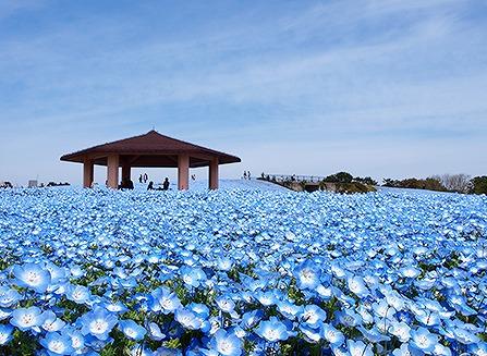 海の中道海浜公園の画像です