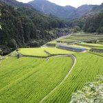 東峰村 棚田の画像です