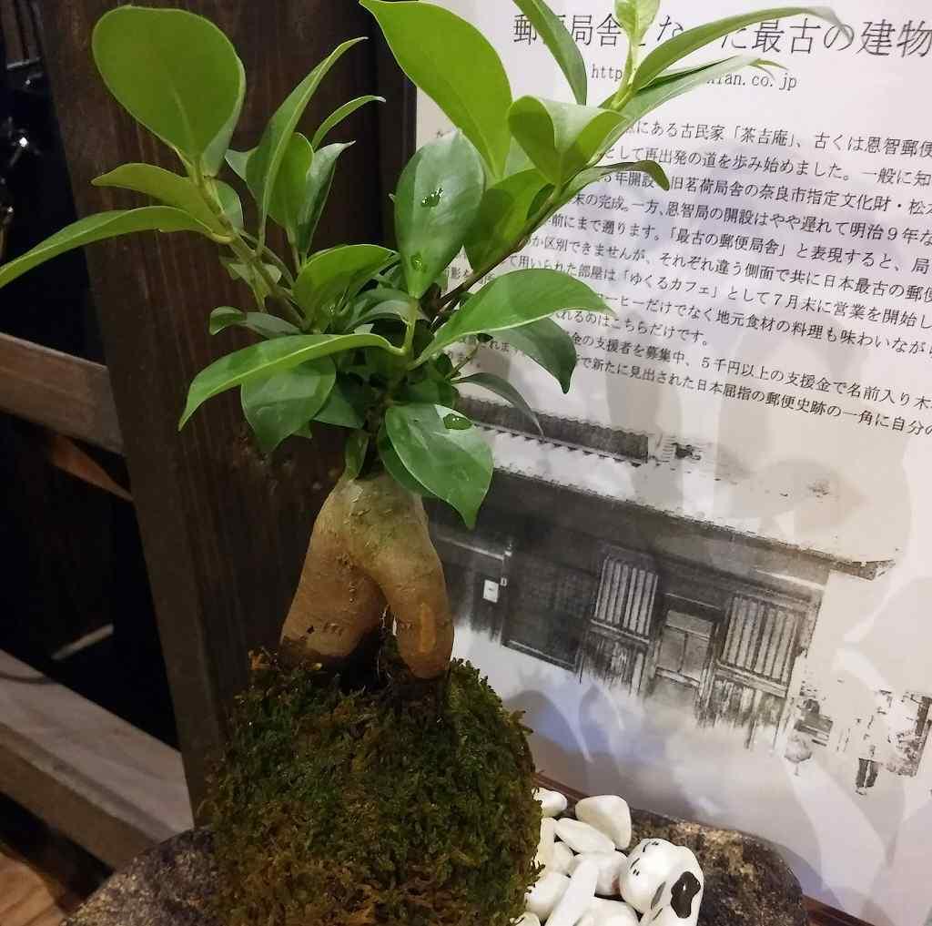 植物の画像です