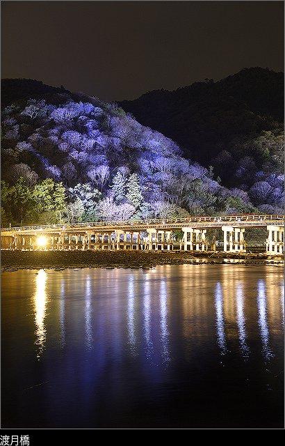 嵐山花灯路の画像です