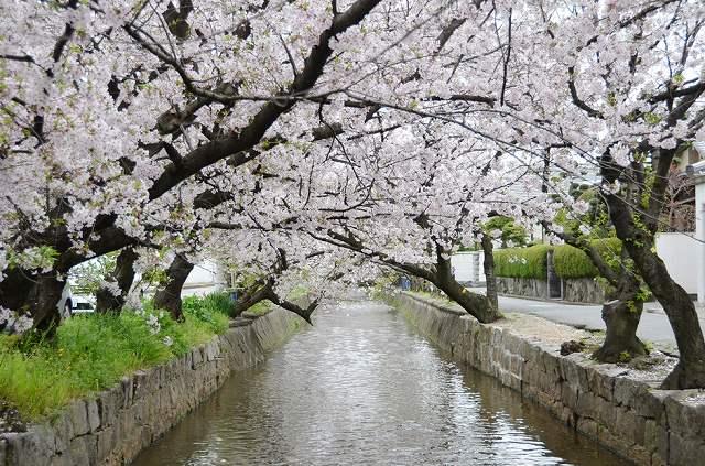 玉串川の画像です
