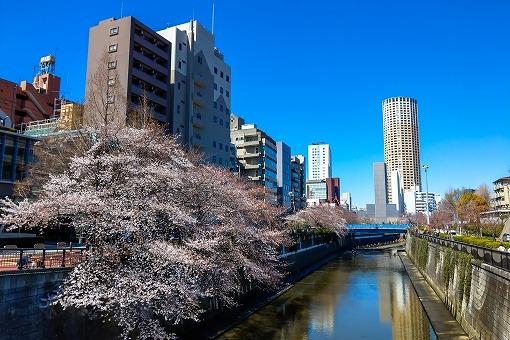目黒川の画像です
