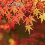 紅葉の画像です